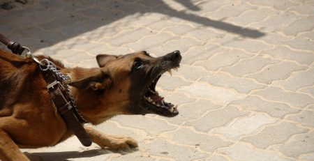 Rochester, NY – Woman Seriously Injured in Dog Attack on Thorn St
